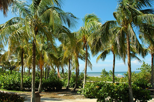 Islamorada Islands palms